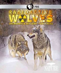Nature:Radioactive Wolves - (Region A Import Blu-ray Disc)
