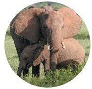 Tower Magnetic License Disc Holder - Elephant