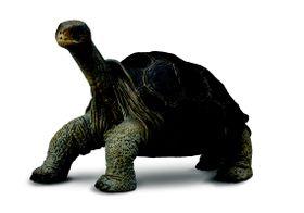 Collecta Wildlife-Pinta Island Tortoise (In Memory Of Lones