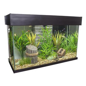 Fluval - Accent Espresso Glass Aquarium - 95 Litre