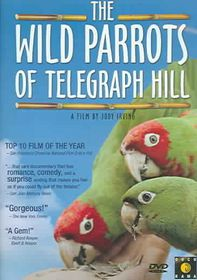 Wild Parrots of Telegraph Hill - (Region 1 Import DVD)