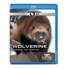 Nature:Wolverine Chasing the Phantom - (Region A Import Blu-ray Disc)